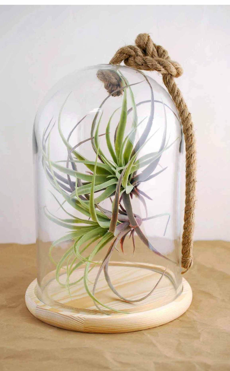 "Bell Jar with Rope  12"" Nautical"