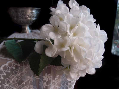 Tall White Lace Hydrangeas Flowers