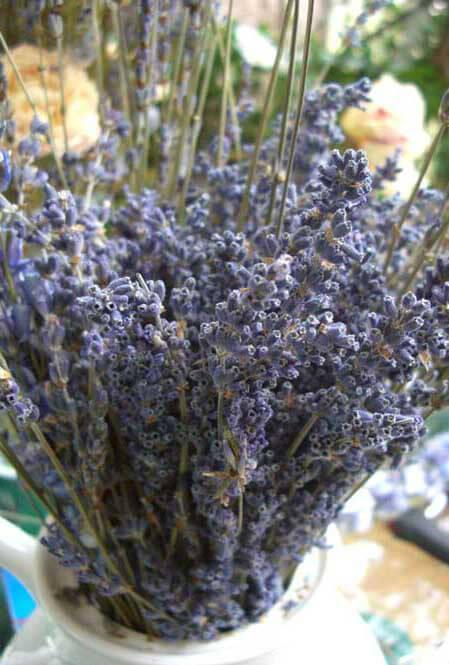 lavender flowers air dried premium blue fragrant 90 stems