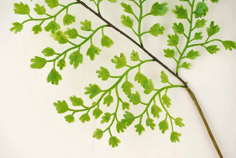 Fern Branch 34in Forest Maidenhair  12 Pack