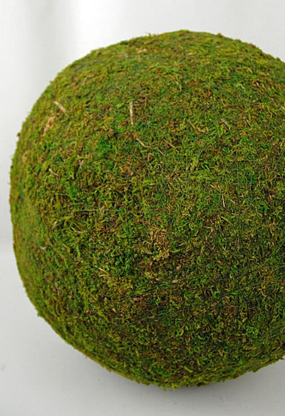 extra large 15 preserved moss sphere