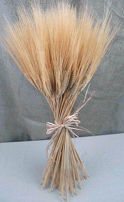 Triticum Wheat Bundle Natural 34 Inch