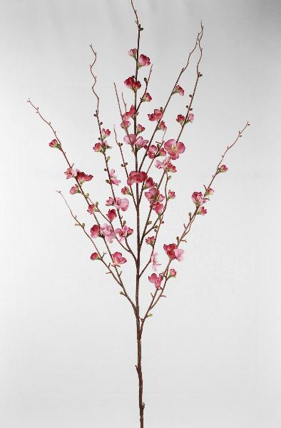 Flowering Quince Branches 45in