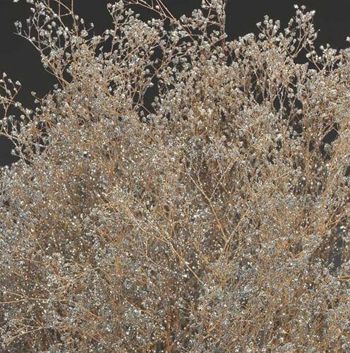 Silver Sparkle Preserved Baby's Breath Branches 24in 4oz Bundle