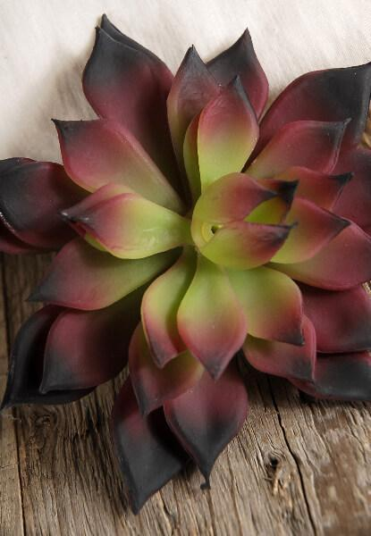 Burgundy & Green Echeveria 4.5in Natural Touch Succulent