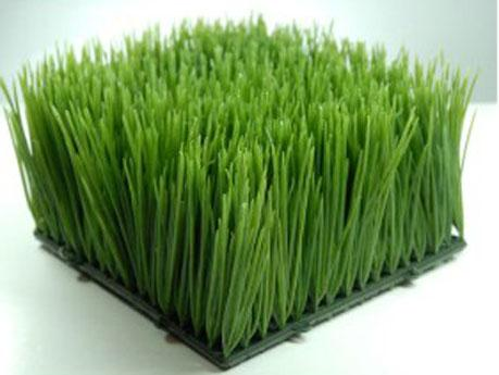 Wheat Grass Mats 6x6 Interlocking