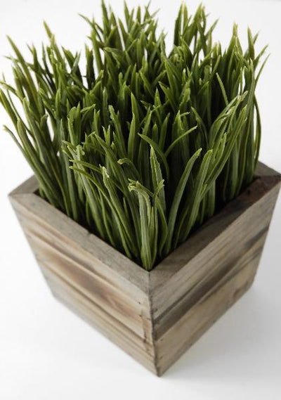 Wood Planter Box Grass Display 7in