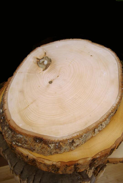 irregular tree slices with bark 12 16in oval