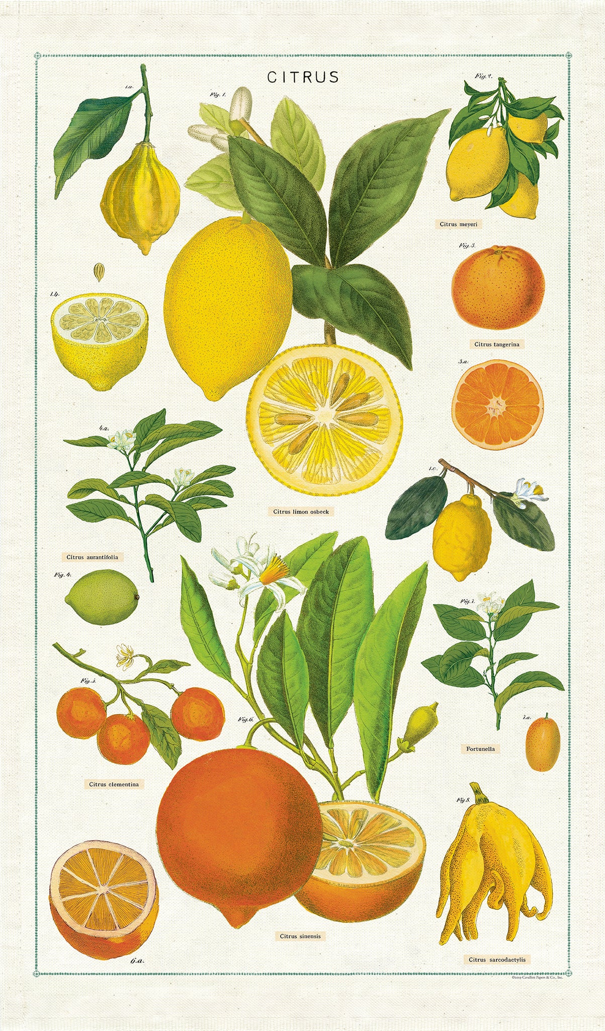 Citrus Tea Towel