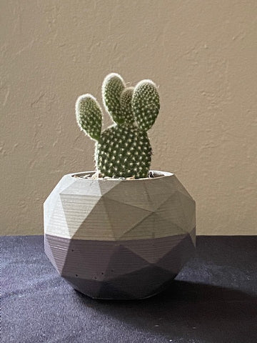 Bunny Ears Cactus in Faceted Sphere Planter
