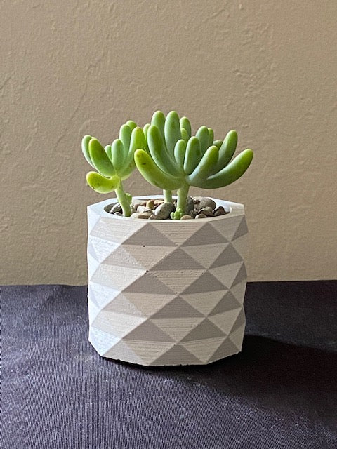 Succulent in Cylindrical Concrete Planter