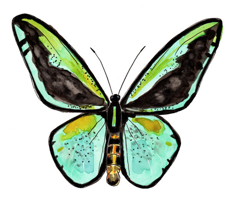 VIRTUAL WORKSHOP 1/30: Mixed Media Butterfly Drawing