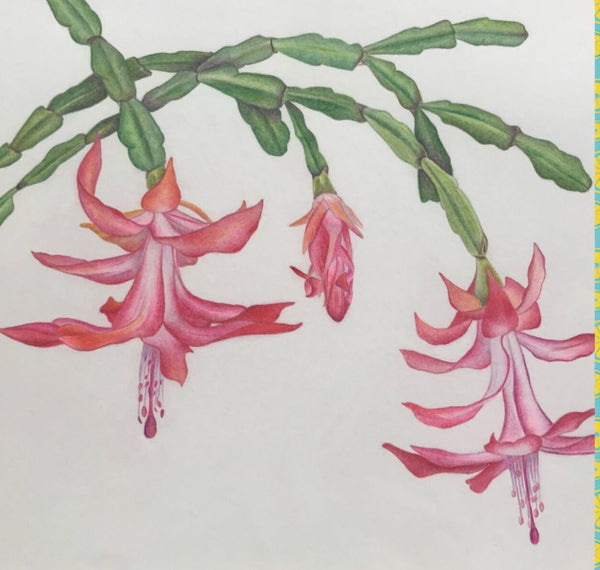 VIRTUAL WORKSHOP Intro to Botanic Illustration in Colored Pencil: 4-week series