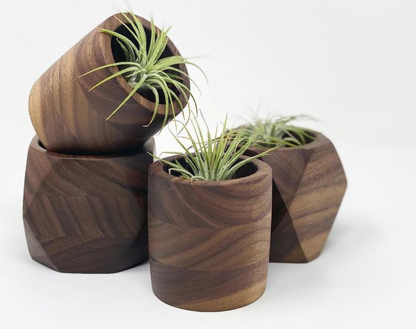 Cylindrical Walnut Air Plant Holder (plant included)