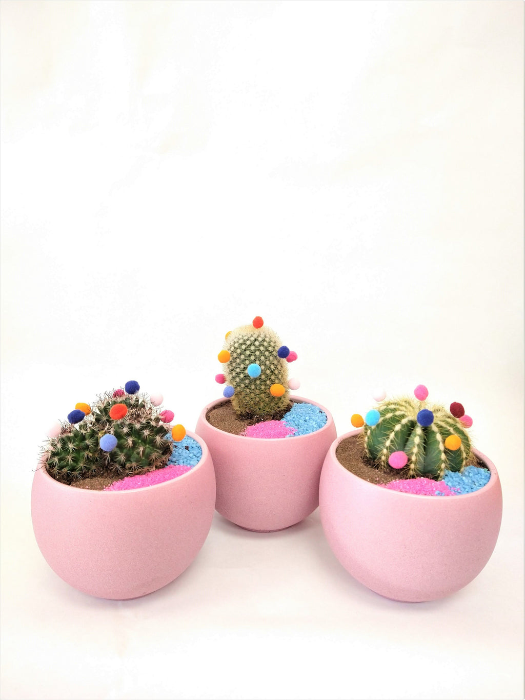 festeive cacti set of three periwinkle flowers toronto plant delivery pickup