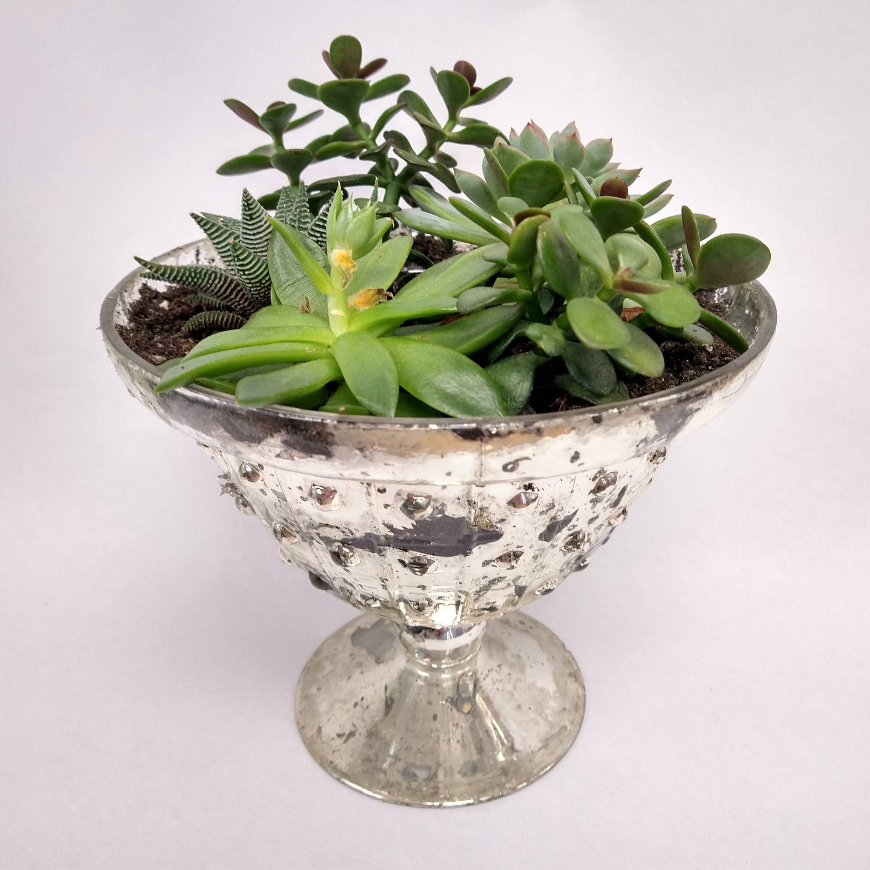 Succulents in mercury footed bowl