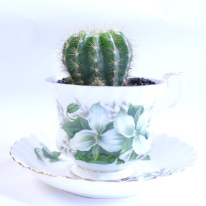 Cactus in a Teacup