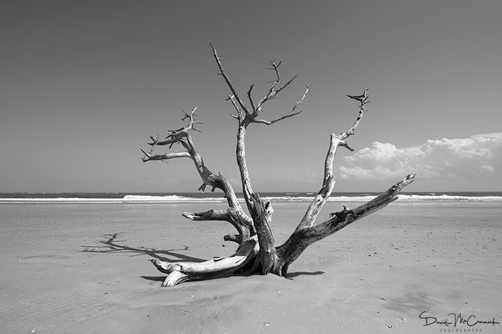 Driftwood Tree - Photograph - Palm Valley Imaging | Trovati Studio