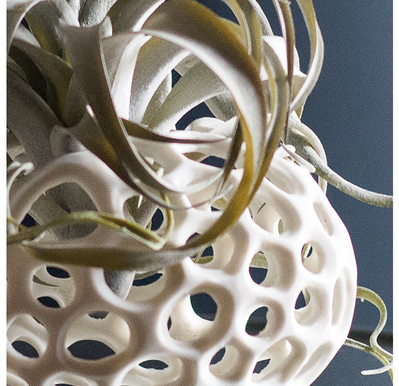 Gold Leaf Design Xerographica Sponge Sculptures - Trovati