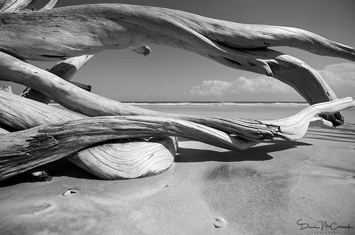 Ocean Window - Photo Print - Palm Valley Imaging | Trovati Studio - B&W