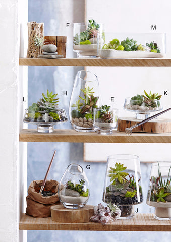 Roost Modern Glass Terrariums