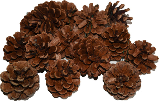 Austrica Natural Pinecones (Wired) | Seasonal Decor | Trovati Studio