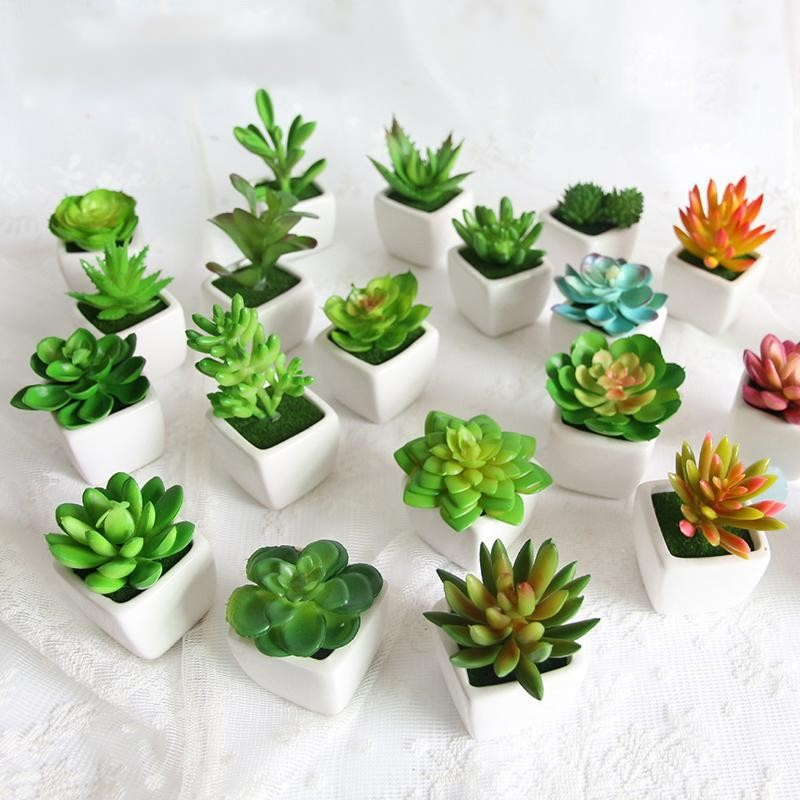 Mini Vivid Cactus - Urban Decor Outlet