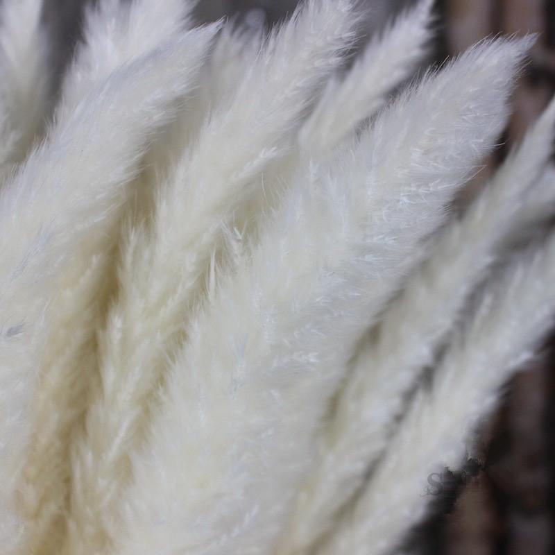 30pcs Dried Pampas Grass - Urban Decor Outlet