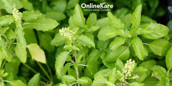 Tulsi - Immune Booster For This Monsoon Season