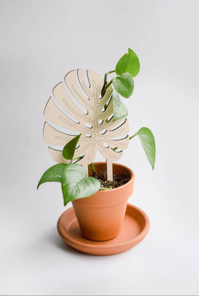 Monstera Plant Trellis
