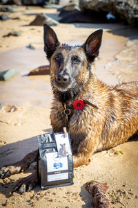 Sea Dog Coffee - Brazil