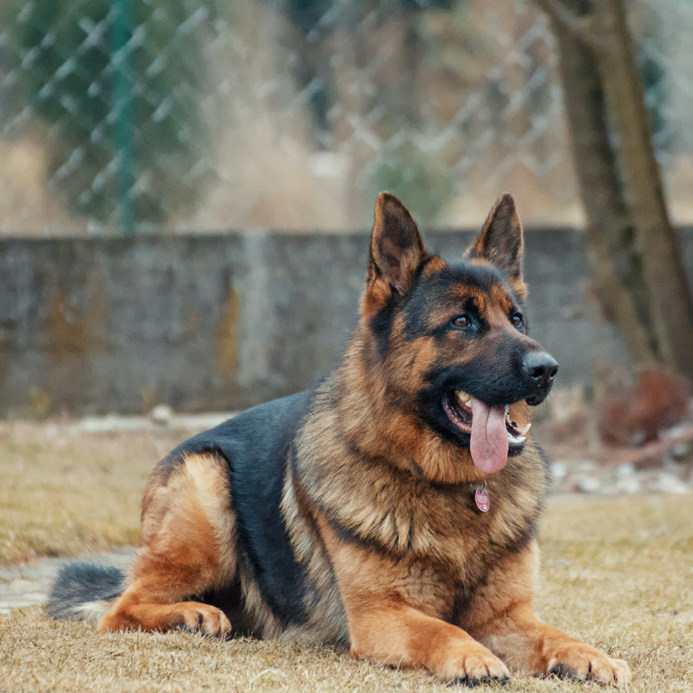 German Shepherds In Need uses AMF C-Channel Magnetic Labels