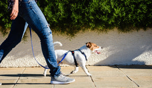 Top benefits of a dog harness
