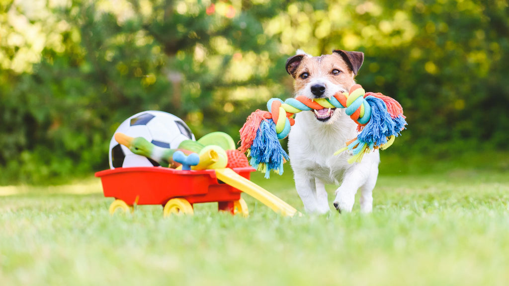 What are the best dog toys?