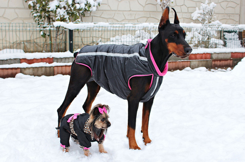 What are the ways to style your dog? Bark 'n' Paws