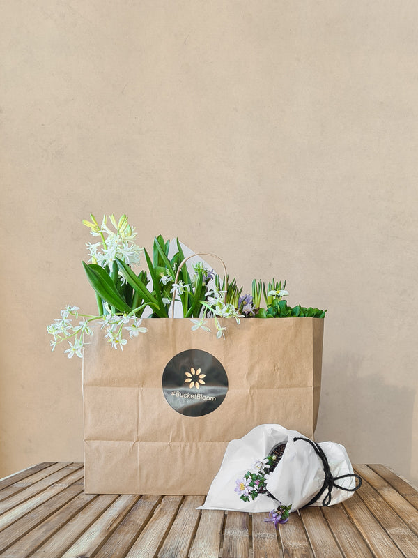 Spring In A Bag
