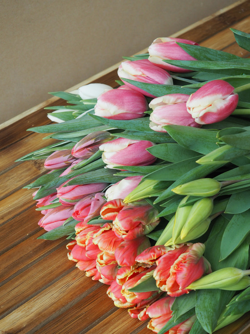 The Tulip Bucket