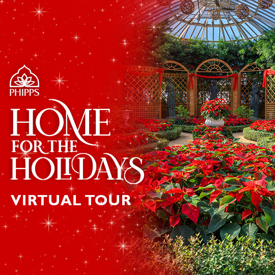 Gift Code for Winter Flower Show Virtual Tour Video