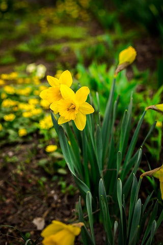 Inspired by Dawn welcomes spring with news that probiotics may offset seasonal allergy symptoms