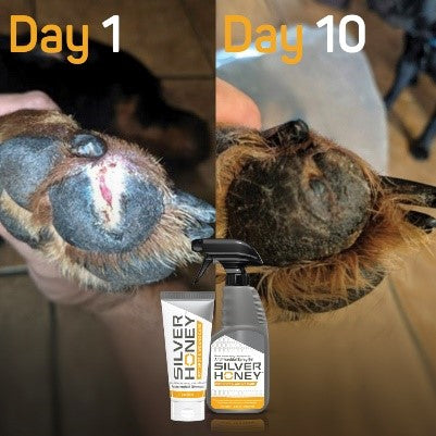 Visible results from Silver Honey would care treatment in 7 to 10 days