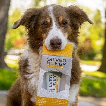 A dog holding a package of Silver Honey ointment and spray gel in his mouth.