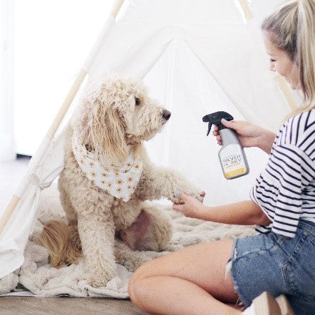 Silver Honey spray gel for dogs with sensitive skin from Absorbinepet