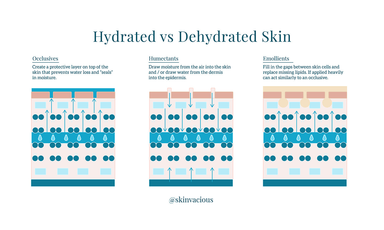skinVacious - Hydrated vs Dehydrated Skin
