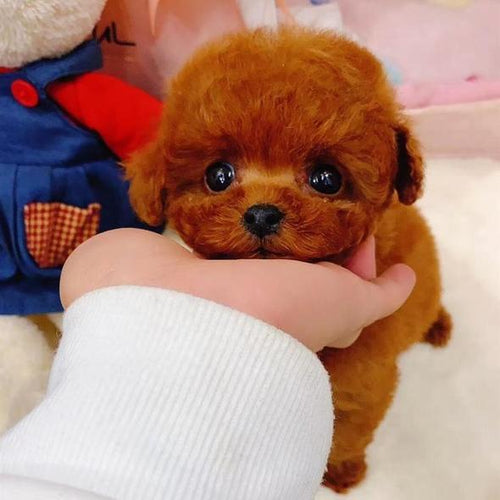 REALISTIC TEDDY DOG LUCKY