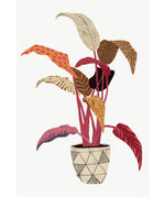 Load image into Gallery viewer, 'Aspidistra Elatior' Art Print