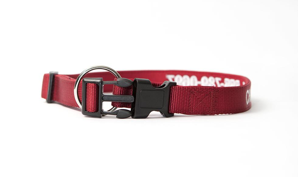 personalized dog collars qualtry