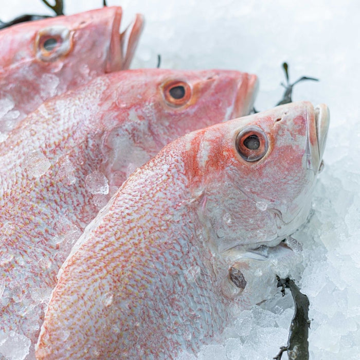Red snapper whole 600g - 800g