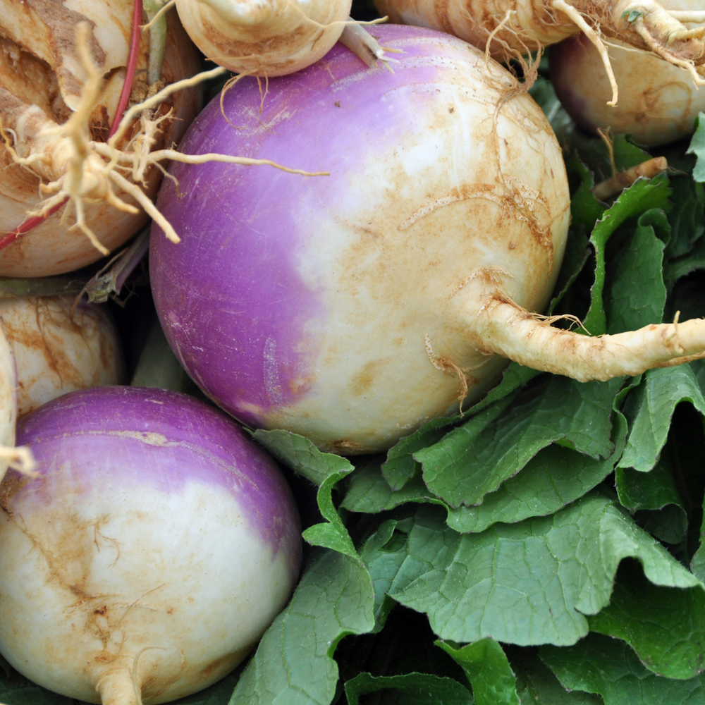Turnip Heirloom 'Purple King' Organic 500g