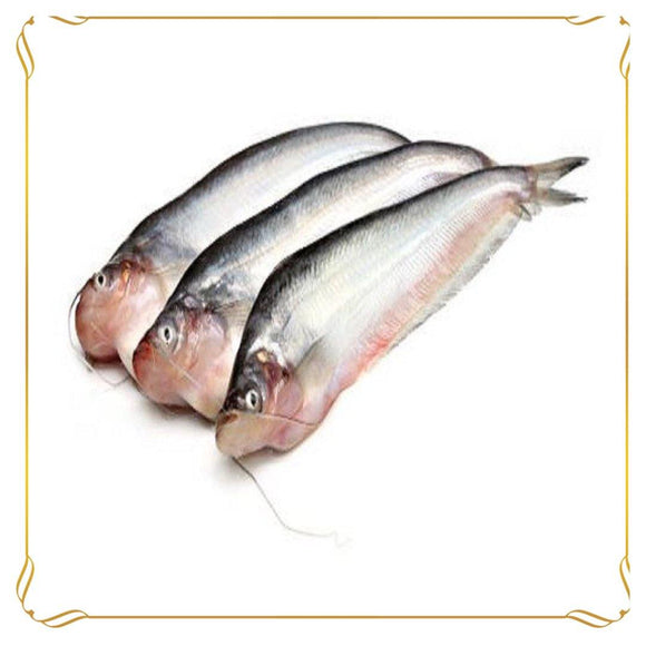 Pabda Maach / Butter Fish Whole | 1000 gms_bongfooodie_Groceries_Always Fresh