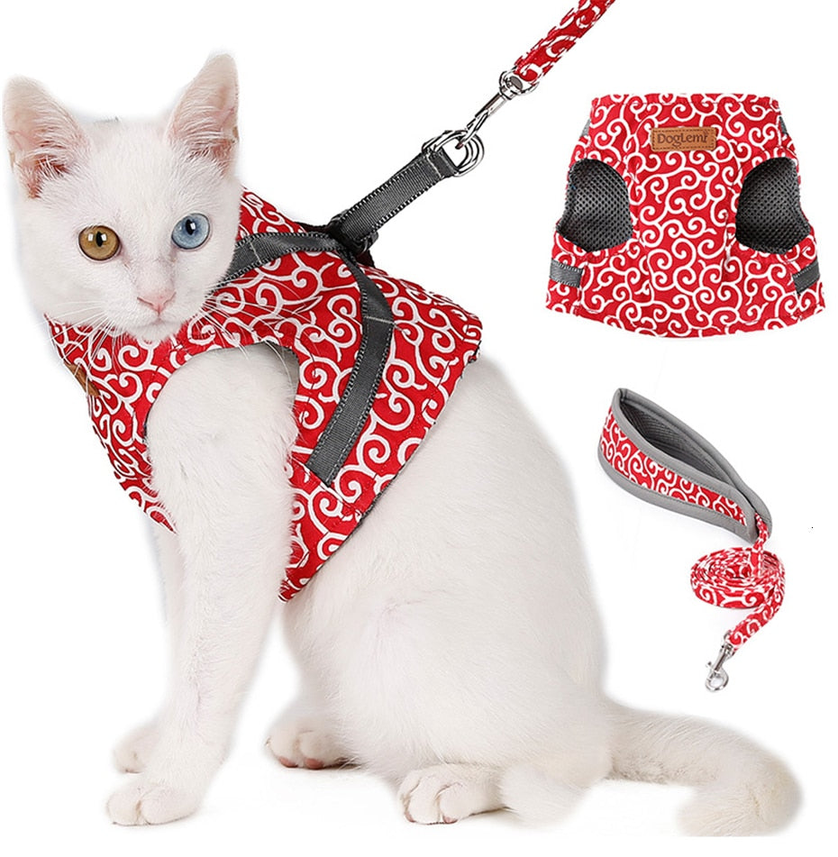 cat-leashes.jpg